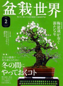 盆栽世界 2021年2月号